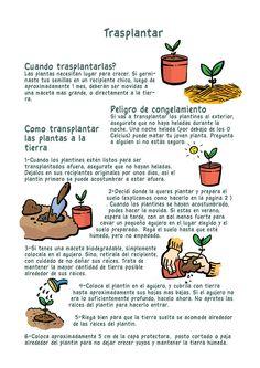 Empezar tu propia huerta a partir de los siguientes tips: transplantar