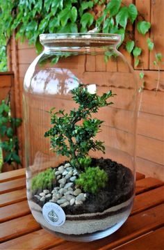 In that case what makes a terrarium sympathetic and attractive for indoor decoration? bulb, teapot, jar, a bottle could turn into a terrarium. Terrarium Diy, How To Make Terrariums, Air Plant Terrarium, Succulent Gardening, Planting Succulents, Ideas Florero, Indoor Garden, Indoor Plants, Plant In Glass