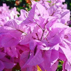 • tropical colour pop • http://ift.tt/18R8d2x