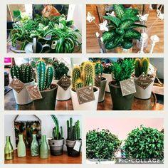 Nieuwe planten op voorraad bij Cosy Cosas in Rijswijk Cactus, Leaves
