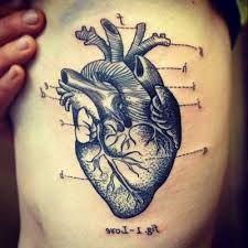 Resultado de imagem para coração humano