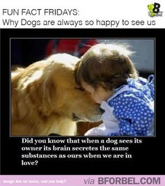 Fun Fact Fridays: Why dogs are always so happy to see us | B for Bel