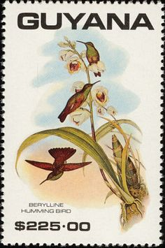 Berylline Hummingbird stamps - mainly images - gallery format