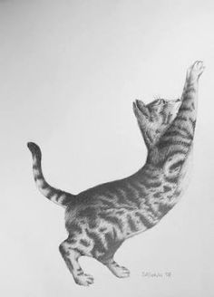 Drawing of cat stretching