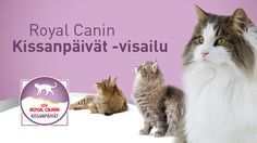 Hei, Osallistu kissan ravitsemus -visailuun, voit voittaa Dyson Animal Turbine -imurin tai kuukauden Royal Canin -ruoat kissallesi!