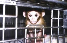 PLEASE SIGN and SHARE this important petition! Asking the EPA to Halt Plans For Unnecessary Chemical Testing on Animals. Approx 80,000 animals will be used for testing! PLEASE CRY OUT for them today!!! Thank You!