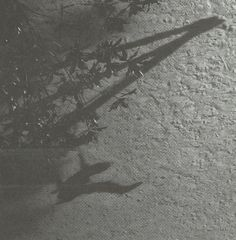 Max Richter - The Blue Notebooks