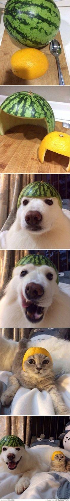 Animals + fruits = i'm smiling :)