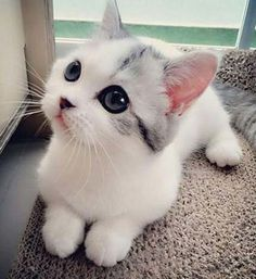 Cute Kittens Run For Cover Cute Cats And Kittens Cartoon Cute Cats And Kittens, I Love Cats, Crazy Cats, Kittens Cutest, Cutest Pets, Cutest Babies, Pretty Cats, Beautiful Cats, Beautiful Images