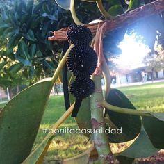 Accesorios para el pelo: Diadema SERENA forrada con satén negro con aplicación de rocalla de color negro.