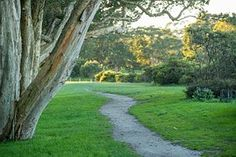 Park, Trees, Grass, Path, Trail, Forest