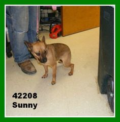 URGENT!!!! CUTE LITTLE GUY SUNNY NEEDS A LOVING HOME ASAP!!!! CAN YOU HELP HIM? IRONTON, OHIO...Available for a limited time from the Lawrence County Dog Pound, 1302 Adams Lane Ironton, OH 45638. Please call the dog warden at 740-533-1736  for further details. Unfortunately the pound does not have long distance calling so please call back if...