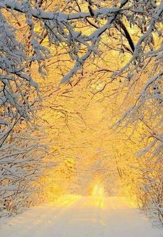 Winter in the woods by Anita Kryszkiewicz. The sunshine in winter that will warm people! Beautiful World, Beautiful Places, Beautiful Pictures, Beautiful Gorgeous, Beautiful Moments, Winter Szenen, Winter Light, Good Morning Winter, Snow Light