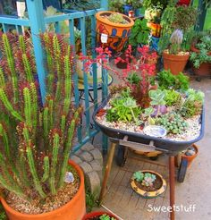 Candice's creations are wonderful examples of how much you can accomplish with succulents in the home and garden, with or without containers. Description from therainforestgarden.com. I searched for this on bing.com/images