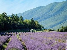 PROVENCE CHIC DECORATION: MES INSPIRATIONS