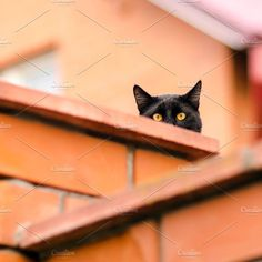 black cat peeking out from behind the wall by Mellisandra on @creativemarket