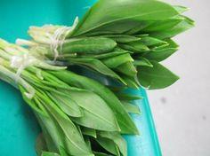leurda - wild garlic