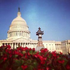 Washington DC Tourism: TripAdvisor has 482,805 reviews of Washington DC Hotels, Attractions, and Restaurants making it your best Washington DC resource.