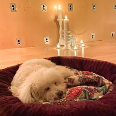 Yoga Dog Last night Hannah and Sheila hosted a private candle flow for a group of friends. Yoga Dog, Group Of Friends, Flow, Candle, Night, Dogs, Animals, Animales, Animaux