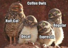 luv that expresso owl ;) coffee friends