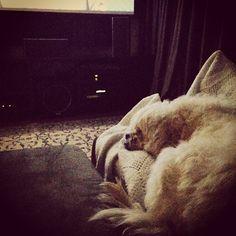 Boris está esperando o começo do jogo! #dog #dogs #cão #cachorro