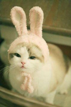 Arthritis In Cats: Symptoms, Causes, & Treatments Cute Cats And Kittens, Baby Cats, I Love Cats, Kittens Cutest, Cute Baby Animals, Animals And Pets, Funny Animals, Neko Cat, Kawaii Cat