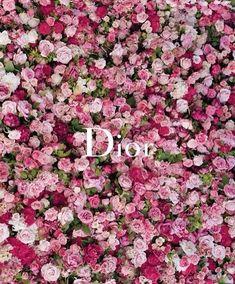 blooming #roses #dior ...
