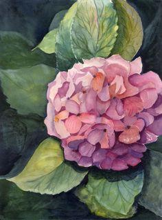 Hydrangea water color.