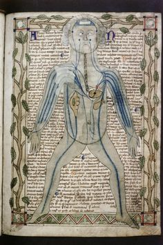 """I'm going to be excessively boring and post several images from the same manuscript because I love it to bits.Bodleian, MS. Ashmole 399, f.019r. Treatise on the human body. England, c.1292.Diagram of body showing arteries."