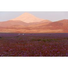 This Is What Happens When Rain Falls On The Earth's Driest Desert ❤ liked on Polyvore featuring backgrounds