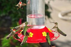 41 Amazing Diy Hummingbird Feeder Ideas To Apply In Your Garden. Attracting birds to the backyard with a feeder gives the perfect opportunity to observe the local species up close. A bird feeder comes. Hummingbird Nectar, Hummingbird Food, Hummingbird Habitat, Hummingbird Migration, How To Attract Hummingbirds, How To Attract Birds, Nectar Recipe, Humming Bird Feeders, Humming Birds