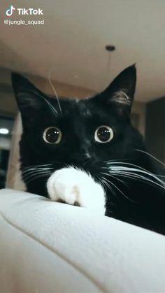 Funny Animal Jokes, Funny Cute Cats, Cute Baby Cats, Funny Cat Videos, Cute Cats And Kittens, Funny Animal Pictures, Cute Funny Animals, Kittens Cutest, Cute Dogs