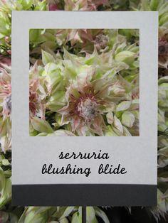 セルリア #flower #shop #matilda #中目黒