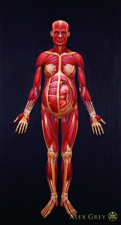 Muscle System (Pregnant Woman) - Alex Grey