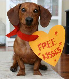 Free Valentine dog kisses! #valentinesdog #valentinesday #dog