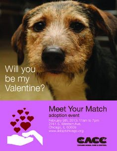 Come out to Chicago Animal Care and Control on Saturday 2/9 from 11am-7pm for the Meet Your Match adoption event. Perhaps your perfect match will be there waiting for you? There are many dogs and cats that can't wait to go to loving homes.  2741 South Western Ave.