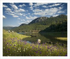 Extremadura, Spain in summer as the flowers blossom