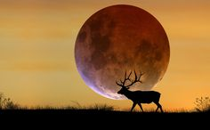 The September full Harvest Moon is exciting enough, but we'll also see a full lunar eclipse and the true supermoon of 2015 with it too!
