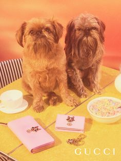 The faces of Bosco and Orso, Creative Director Alessandro Michele's Boston Terriers, feature as colorful enameled detail on a leather wallet and a card case. The designs are inspired by Unskilled Worker's artworks. Photographer: Petra Collins Creative Director: Alessandro Michele Art director: Christopher Simmonds