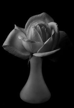 blackandwhite flower blancoynegro fleur rose flor rosa sultry softbox reflector strobe sidelit sidelight fromraw tabletopphotography tonalvalues