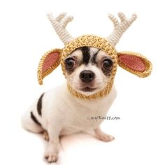 Funny Dog Hat Crochet Amigurumi Animal Reindeer Chihuahua Cat