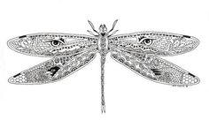 DragonflyBW.jpg