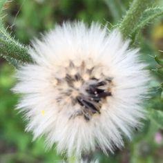 Fleur du jardin #fleur #flower #jardin #naturelovers #nature #botanique #botanic #biodiversite #biodiversity #garden
