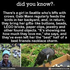 theres-a-girl-in-seattle-whos-bffs-with-crows - did you know? Animal Facts, Animal Memes, Crow Facts, Raven Facts, Good To Know, Did You Know, Animal Intelligence, Rabe, Faith In Humanity Restored