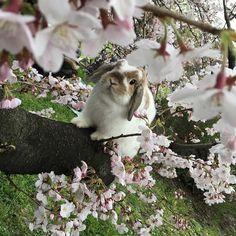 Sakura Saturday at #Tokyo