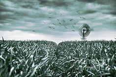 Pinwheel of Ruegen. Modern Graphic Design, Graphic Design Inspiration, Felder, Baltic Sea, Pinwheels, Land Scape, Flowers, Plants, Photograph