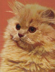 Exquisite Chinese Suzhou handmade silk embroidery art cat painting