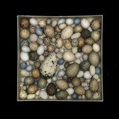 eggs011 | Flickr - Photo Sharing!
