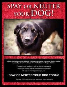 Spay or Neuter your Dog!