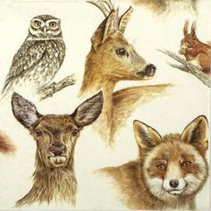 4 Single  Party Paper Napkins for Decoupage Decopatch Craft Forest Animals
